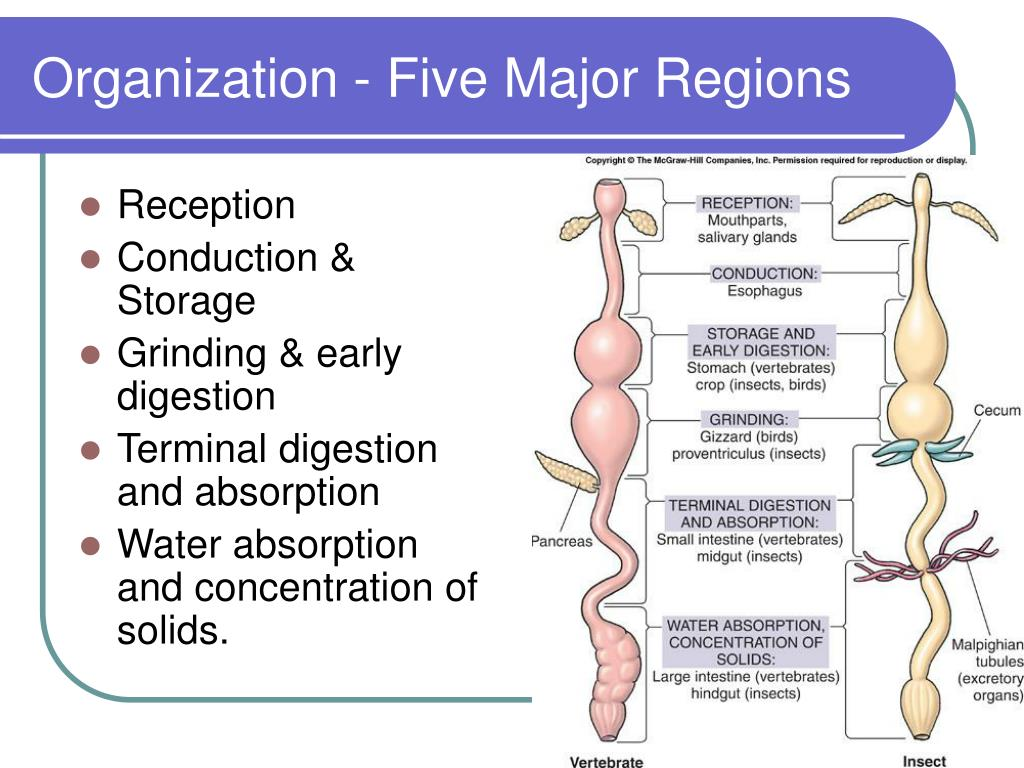 Organization - Five Major Regions