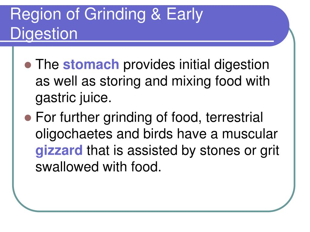 Region of Grinding & Early Digestion