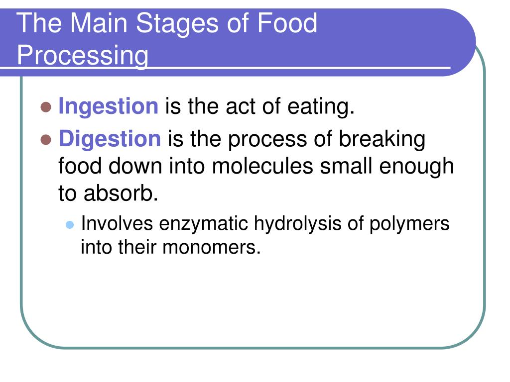 The Main Stages of Food Processing