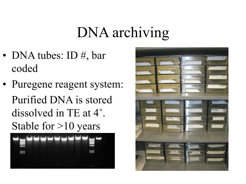 DNA archiving