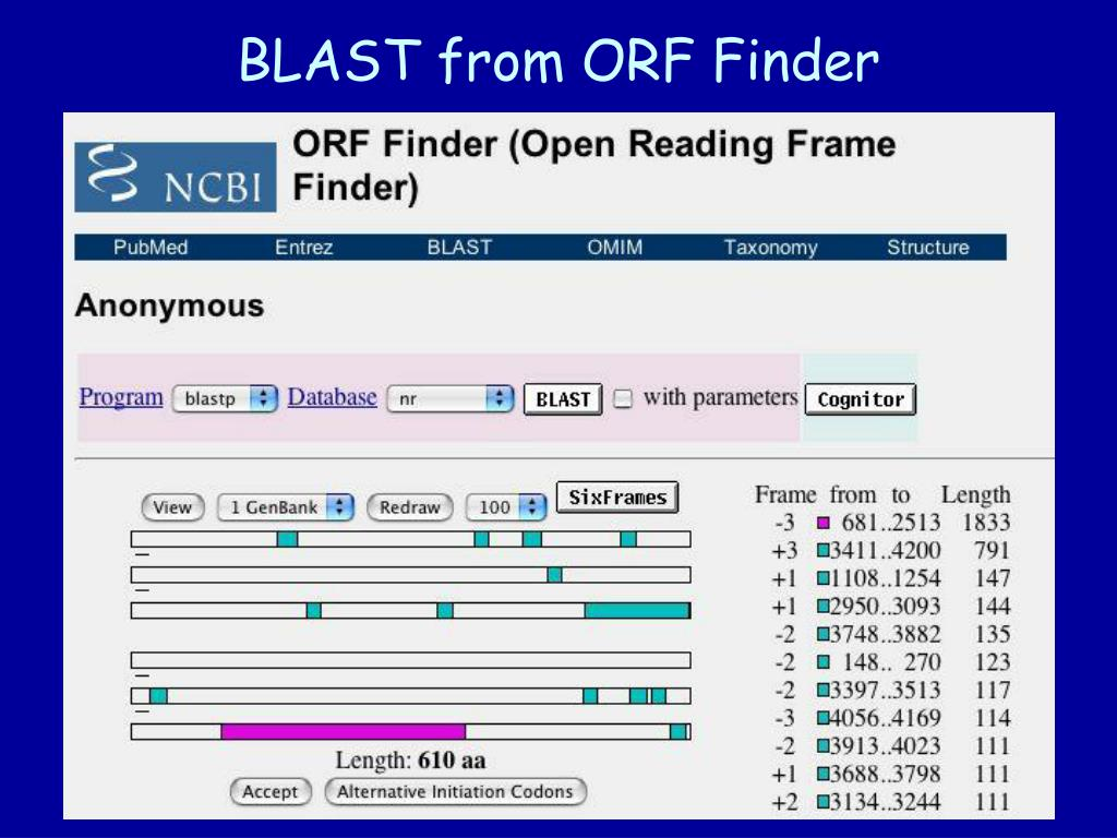 BLAST from ORF Finder