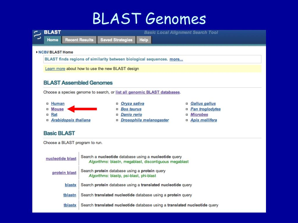 BLAST Genomes