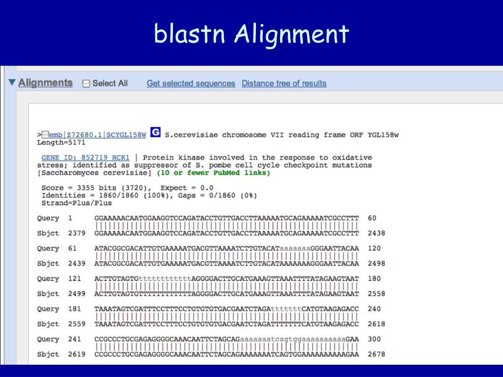blastn Alignment