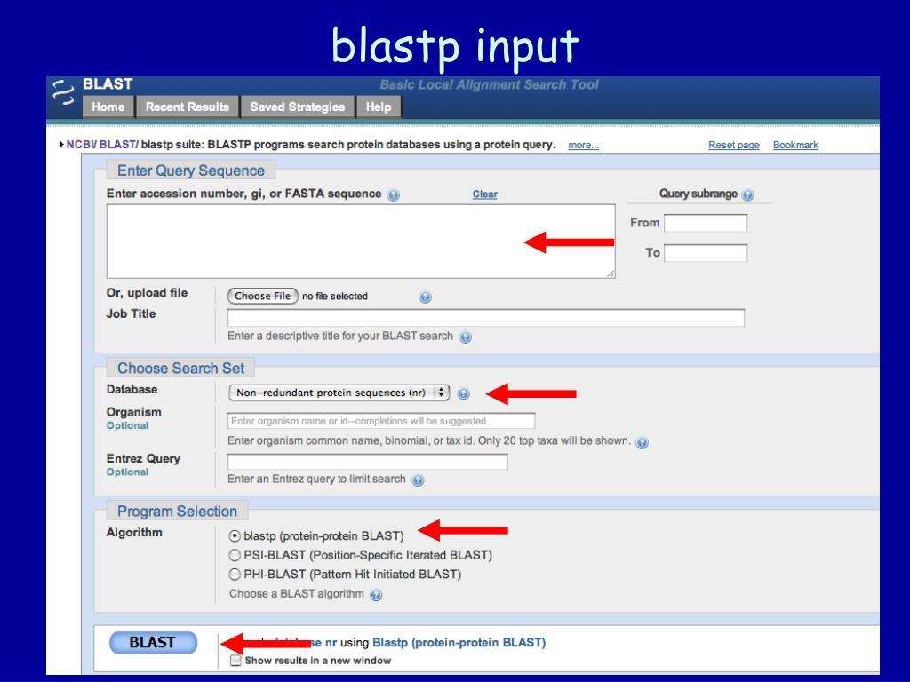 blastp input