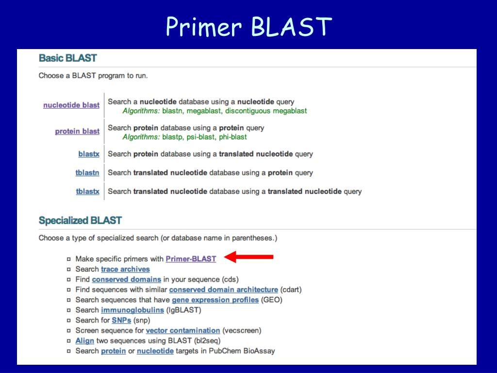 Primer BLAST