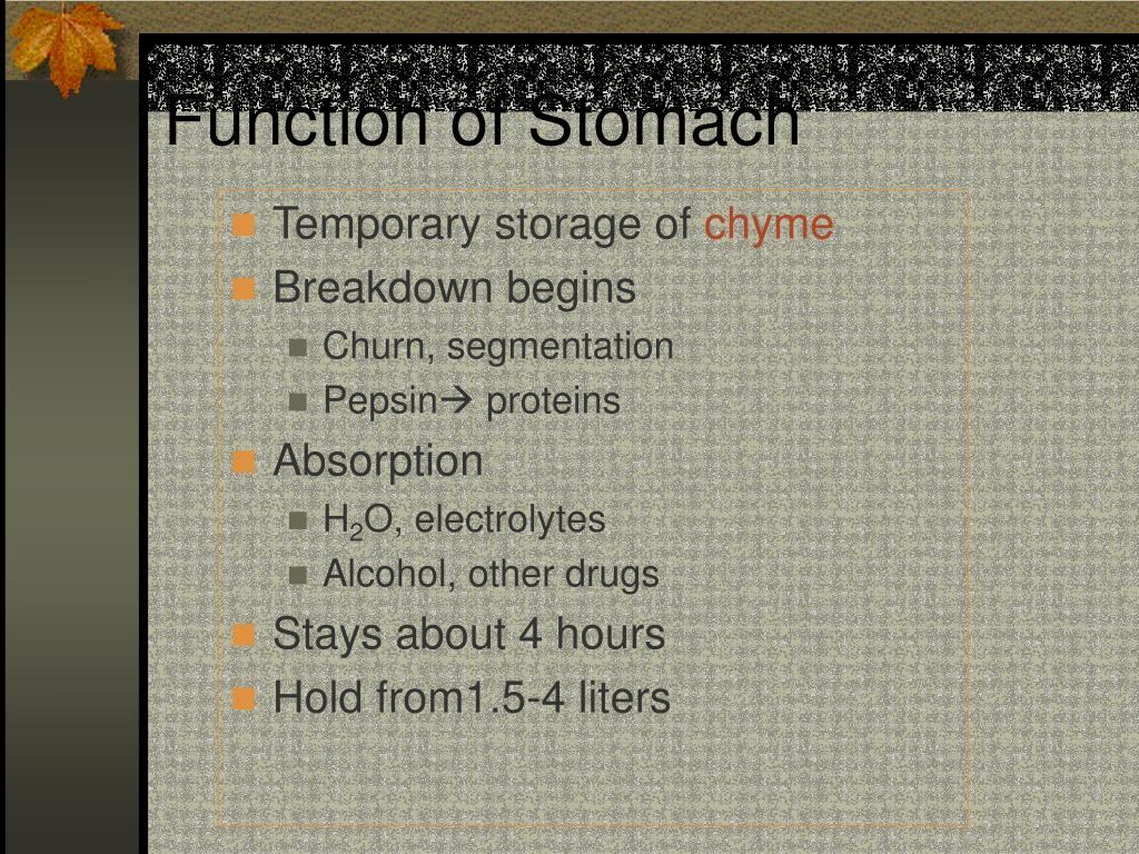 Function of Stomach