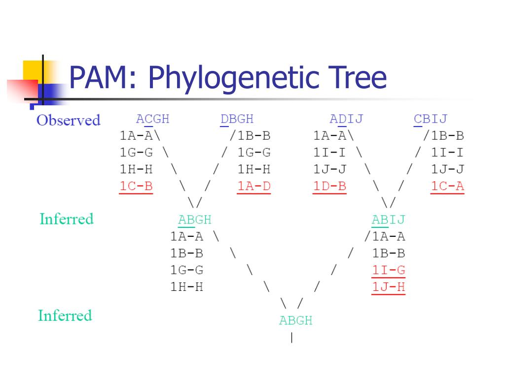 PAM: Phylogenetic Tree