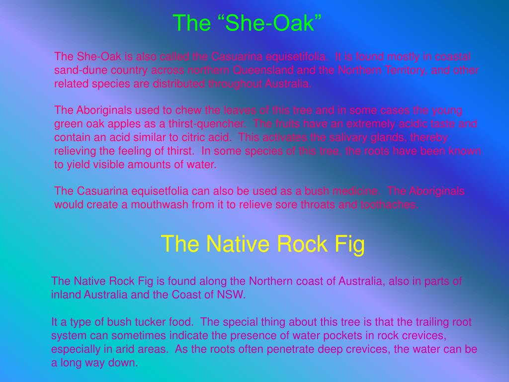 "The ""She-Oak"""