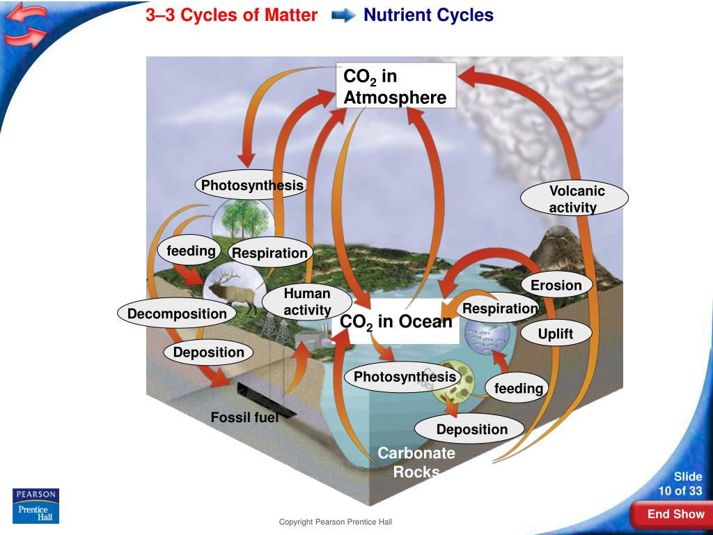 Nutrient Cycles