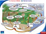 nutrient cycles12