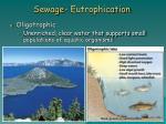 sewage eutrophication