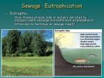 sewage eutrophication7
