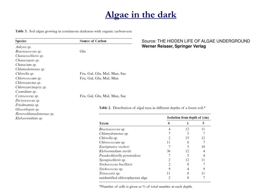 Algae in the dark