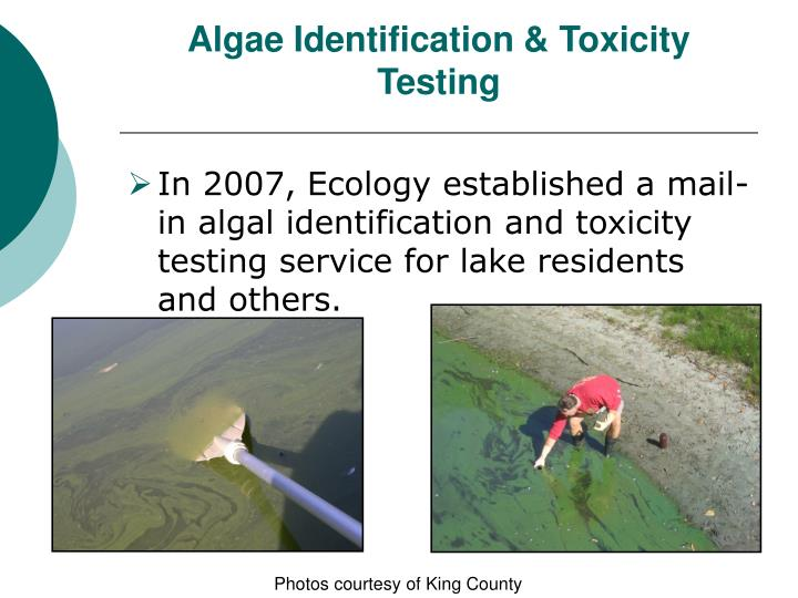 Algae Identification & Toxicity Testing