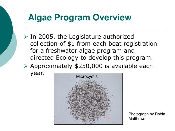 Algae program overview
