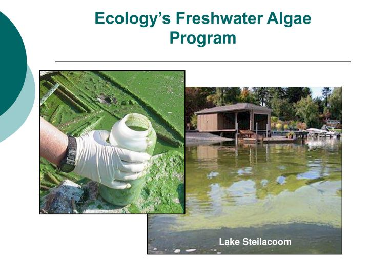 Ecology s freshwater algae program