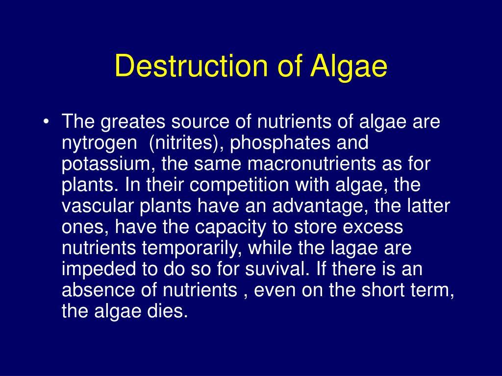 Destruction of Algae