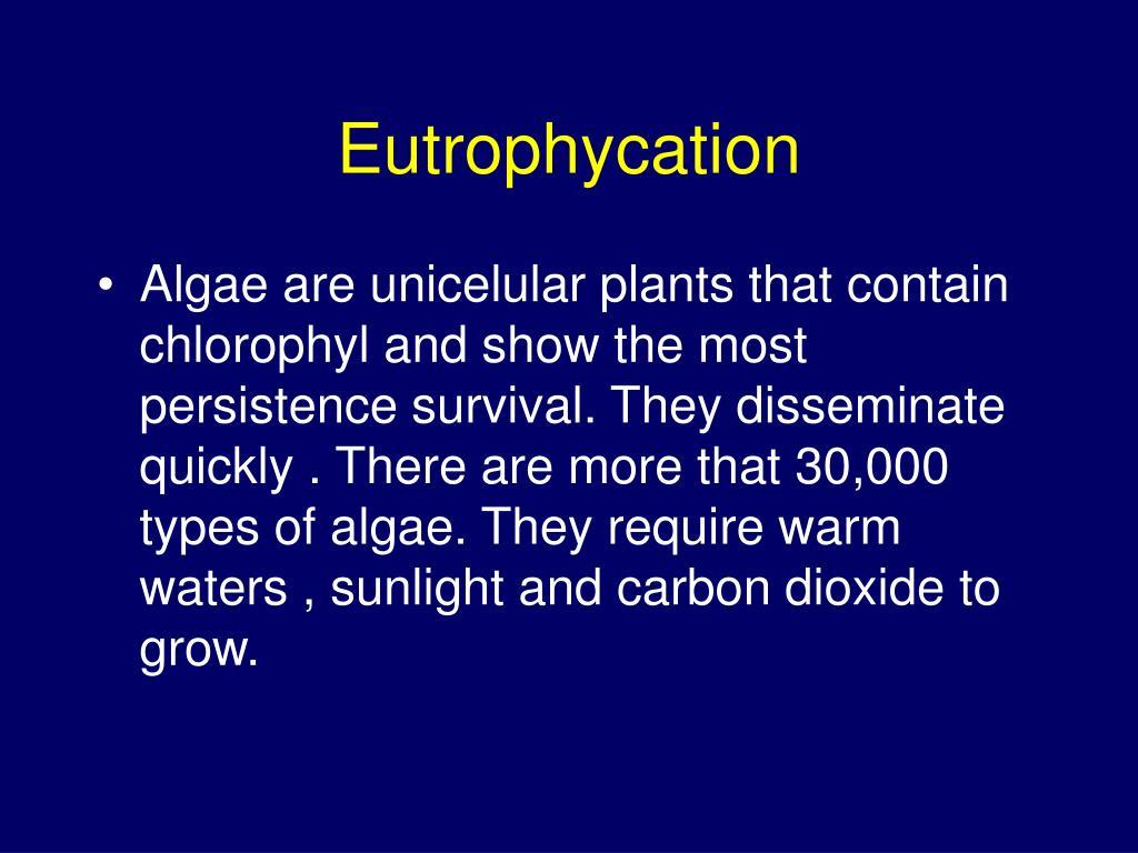 Eutrophycation