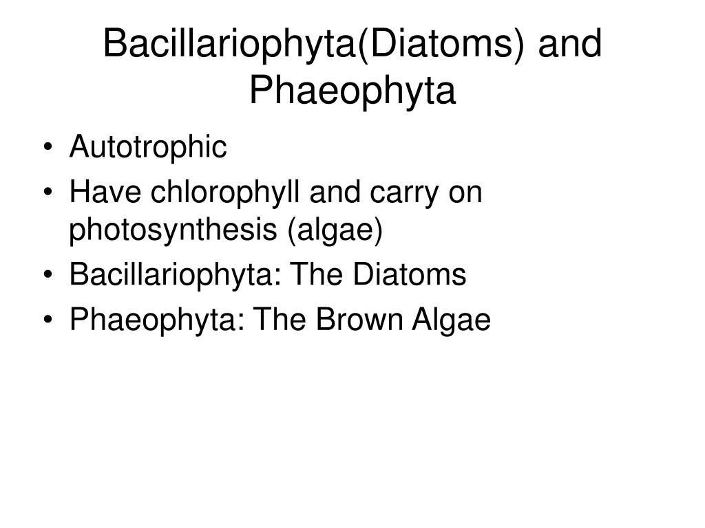 Bacillariophyta(Diatoms) and Phaeophyta
