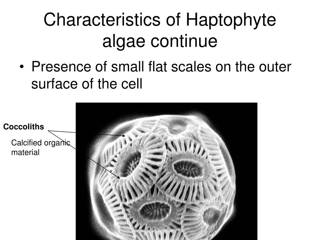 Characteristics of Haptophyte algae continue