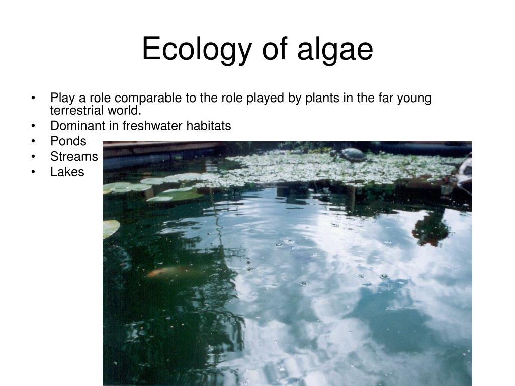 Ecology of algae