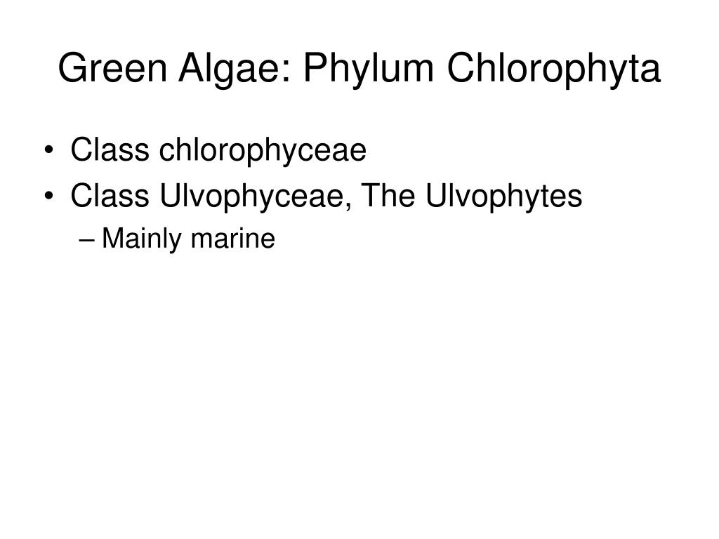 Green Algae: Phylum Chlorophyta