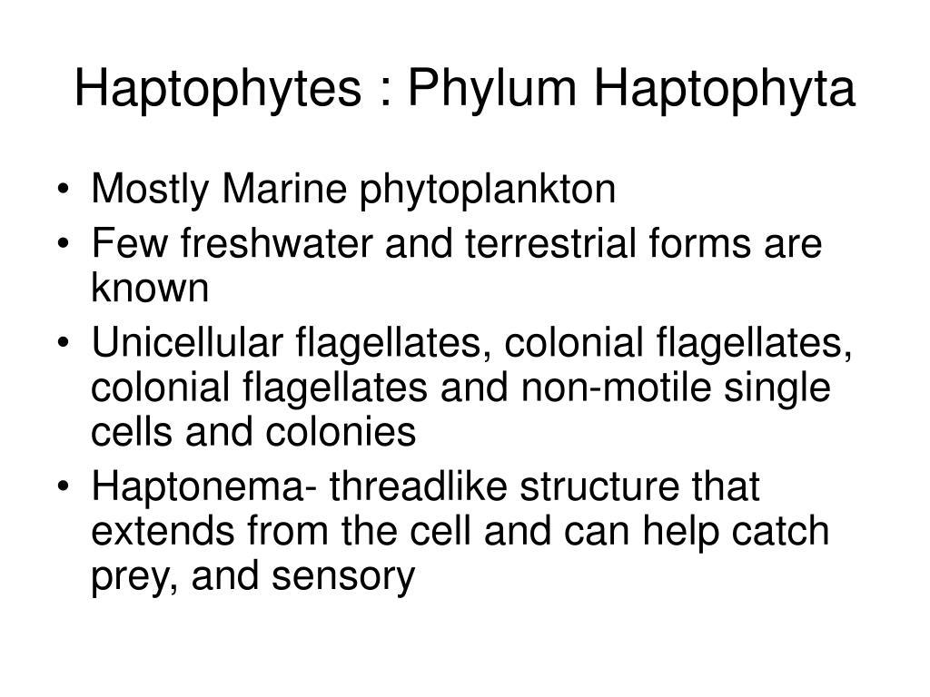 Haptophytes : Phylum Haptophyta