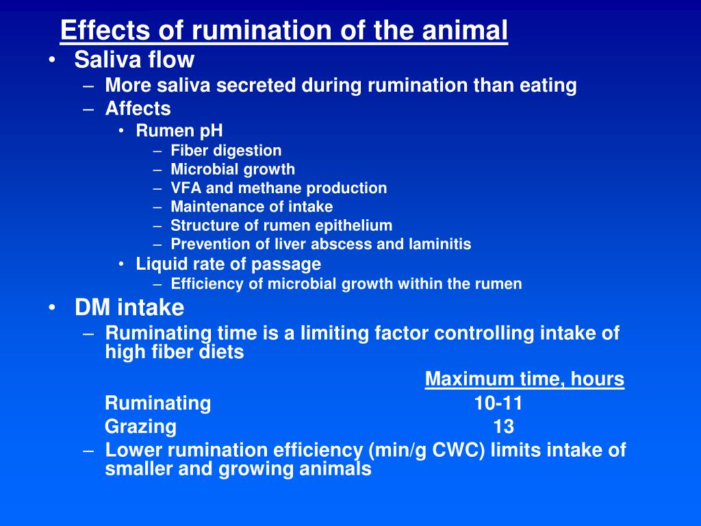 Effects of rumination of the animal