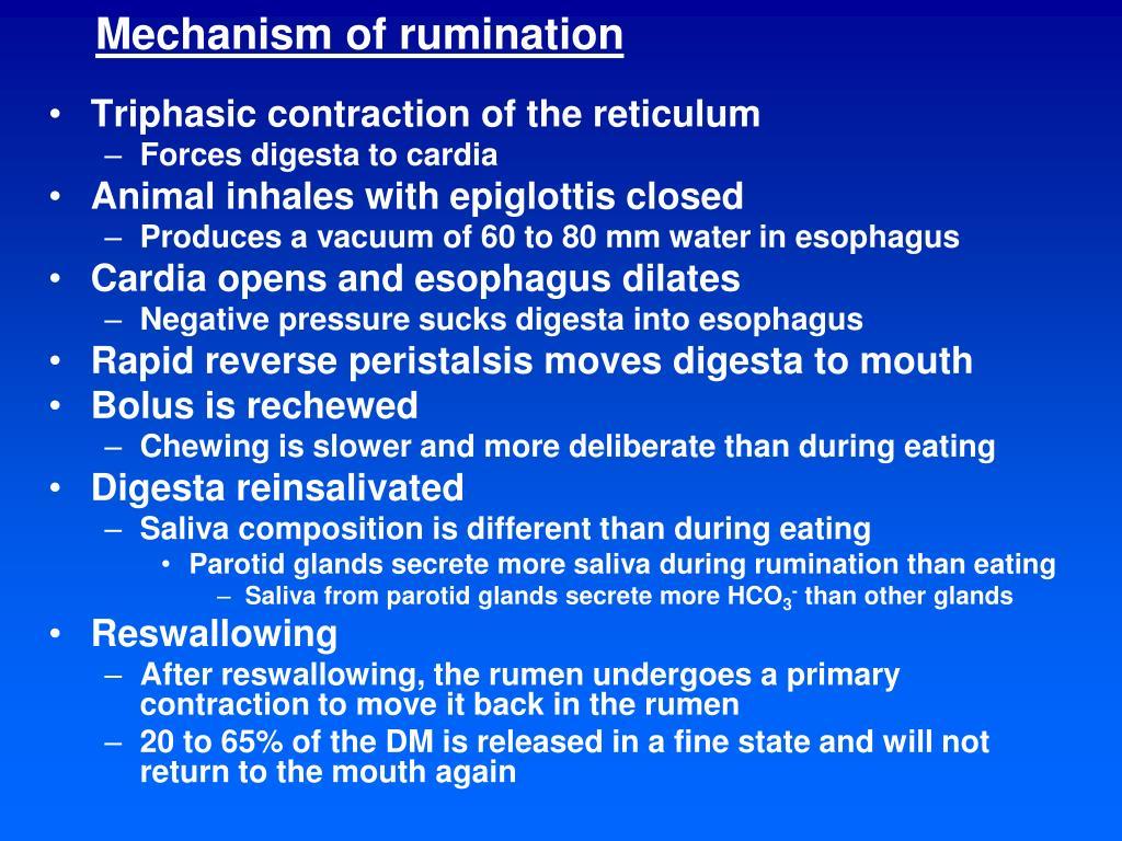 Mechanism of rumination