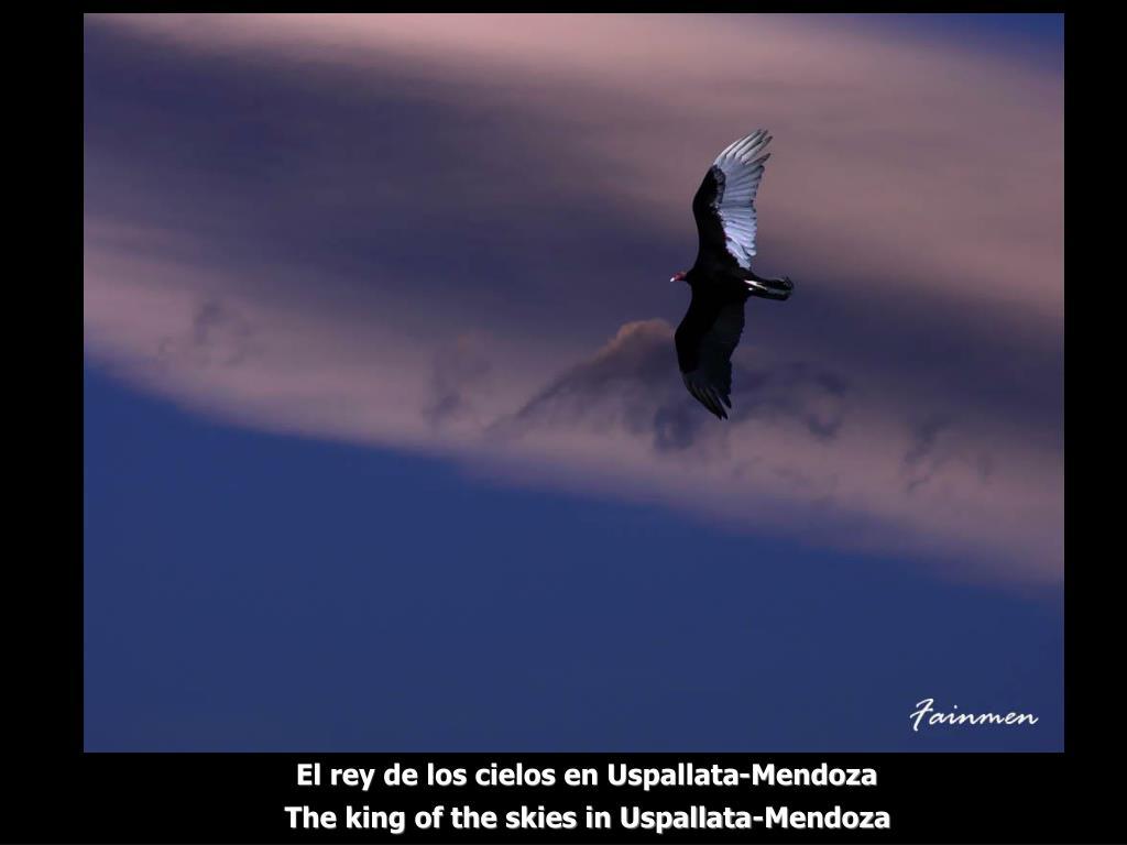 El rey de los cielos en Uspallata-Mendoza