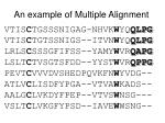 an example of multiple alignment