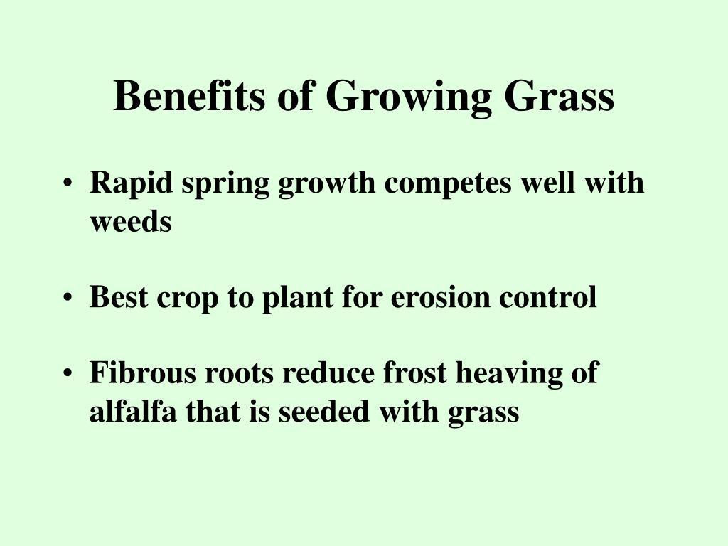 Benefits of Growing Grass