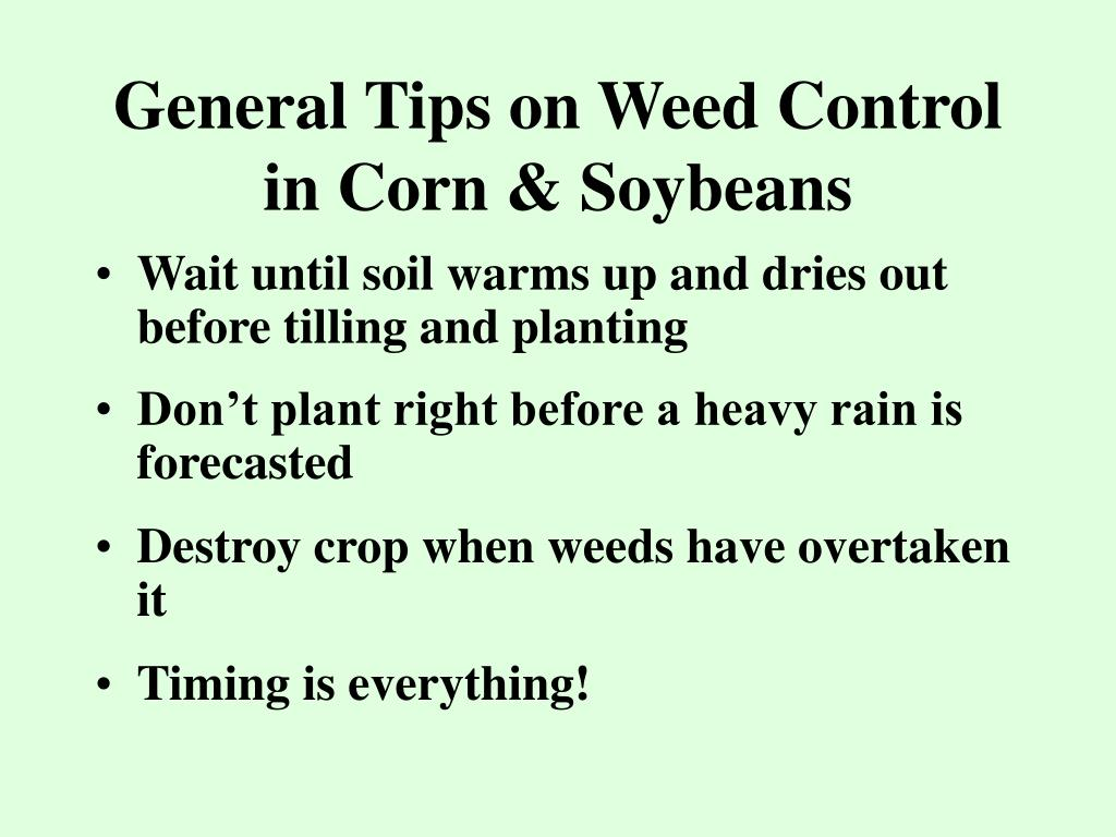 General Tips on Weed Control in Corn & Soybeans