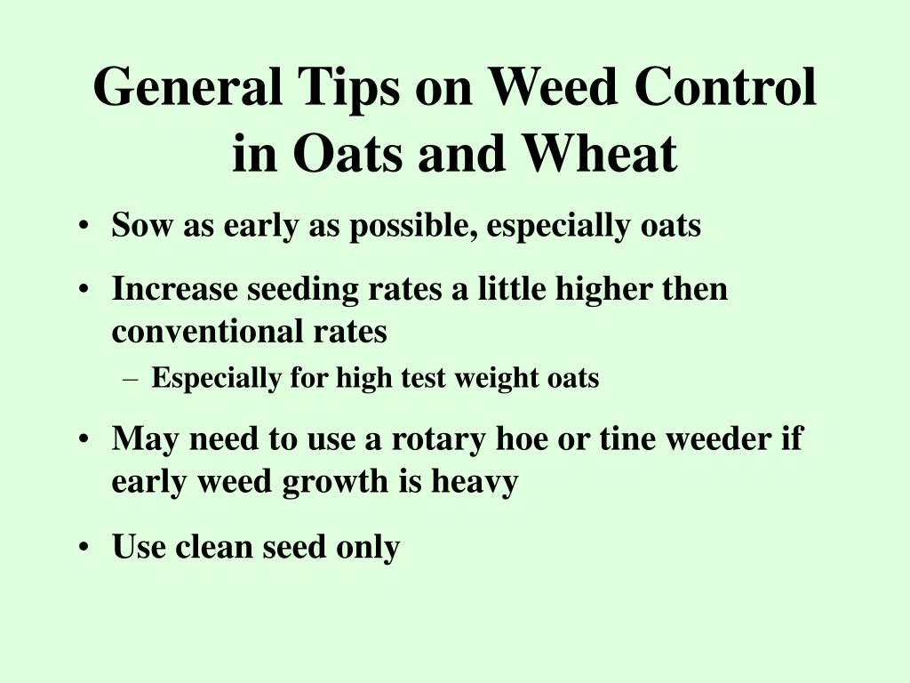 General Tips on Weed Control in Oats and Wheat