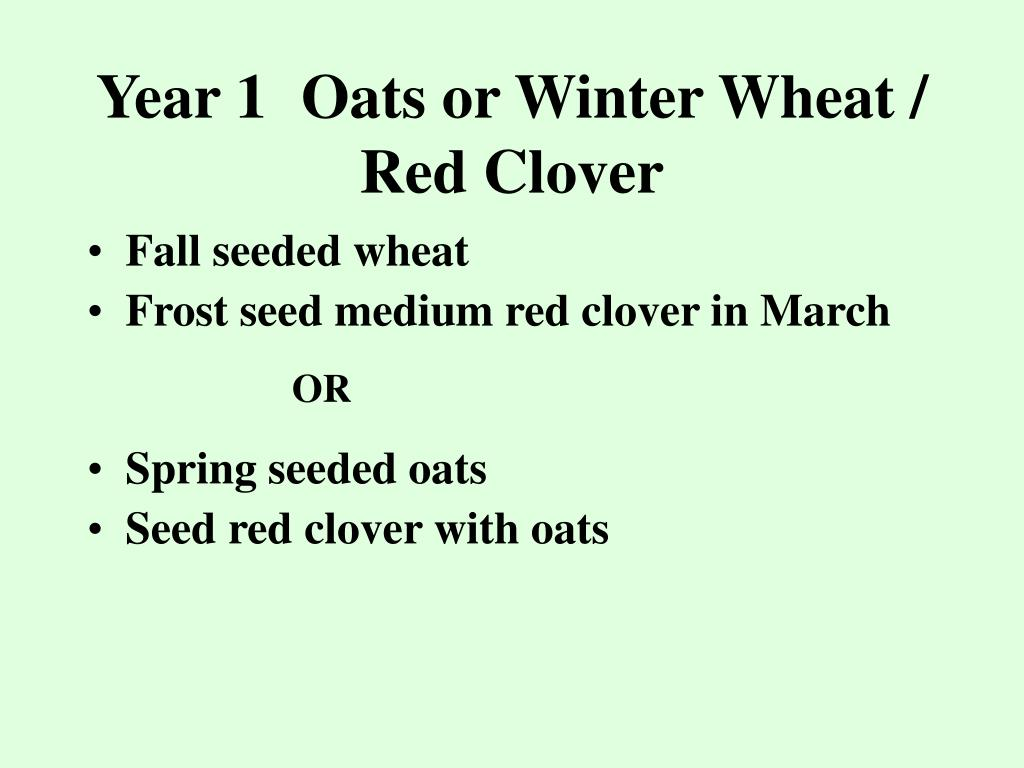 Year 1Oats or Winter Wheat / Red Clover