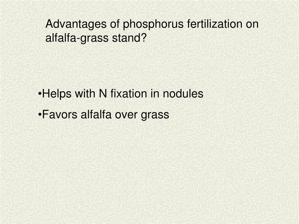 Advantages of phosphorus fertilization on alfalfa-grass stand?