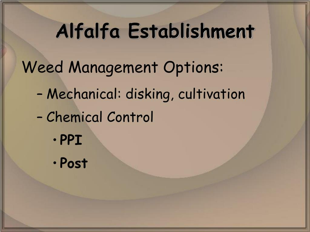 Alfalfa Establishment