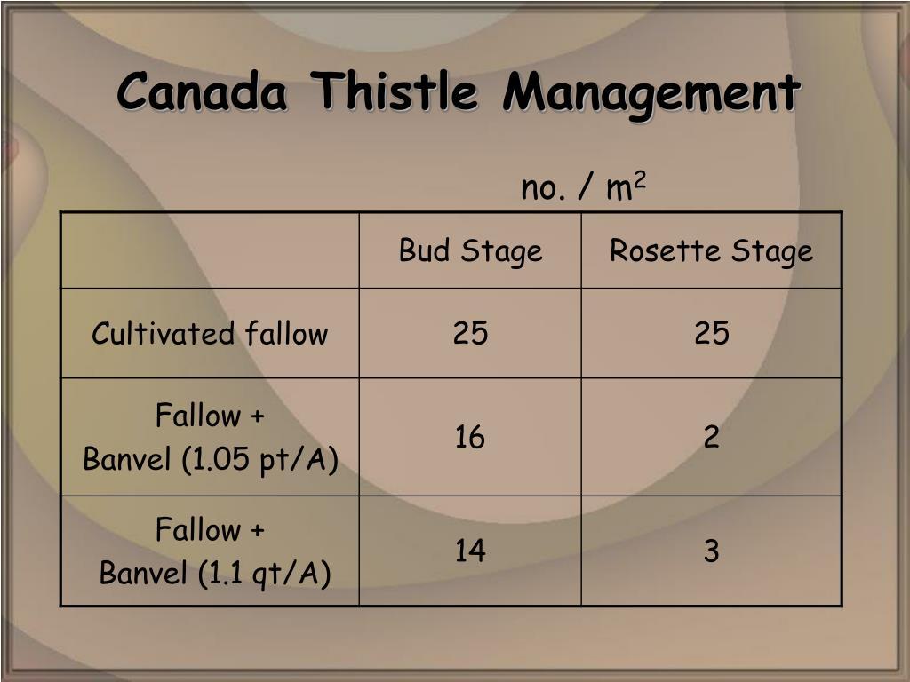 Canada Thistle Management
