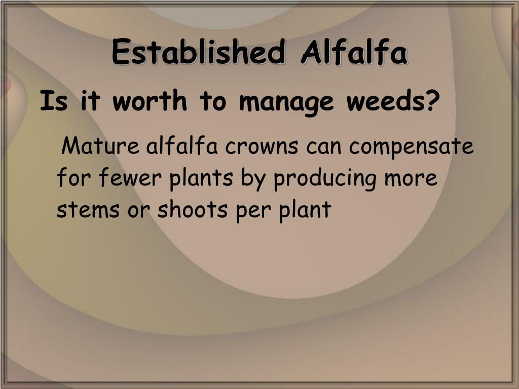 Established Alfalfa