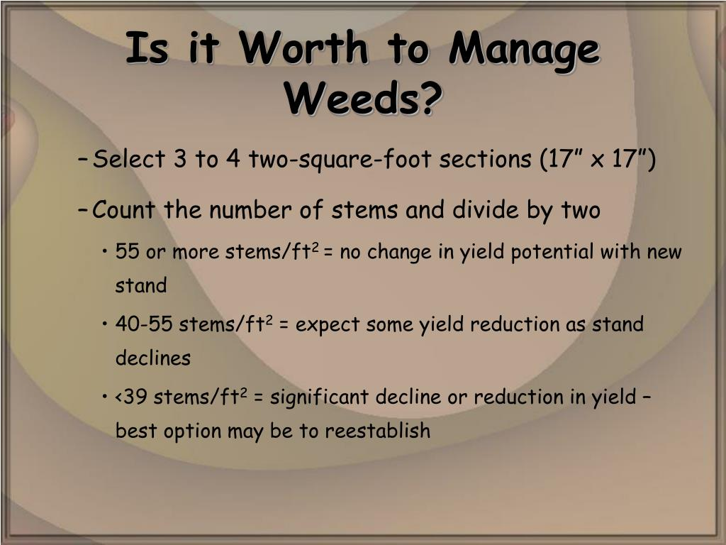 Is it Worth to Manage Weeds?