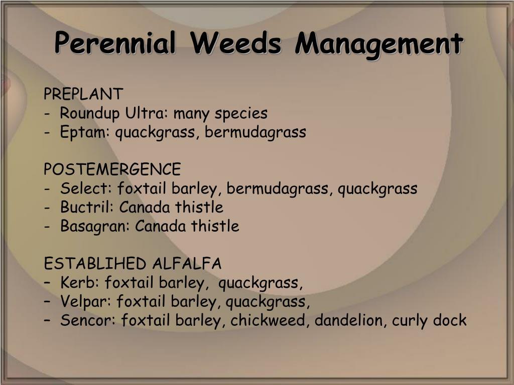 Perennial Weeds Management