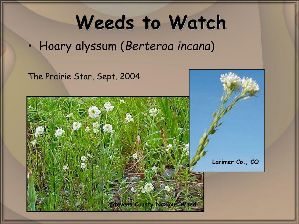 Stevens County Noxious Weed