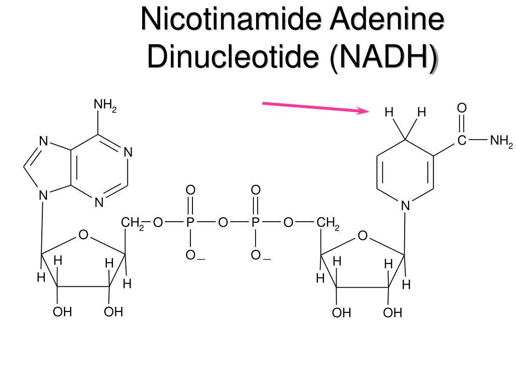 Nicotinamide Adenine Dinucleotide (NADH)