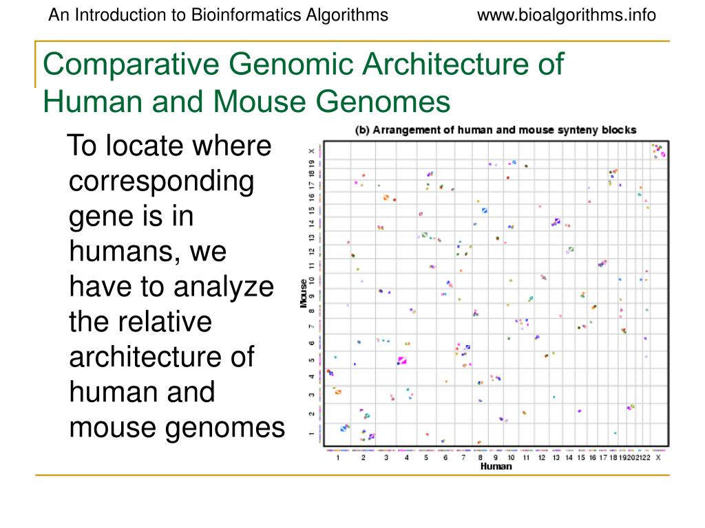 Comparative Genomic Architecture of Human and Mouse Genomes