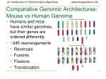 comparative genomic architectures mouse vs human genome