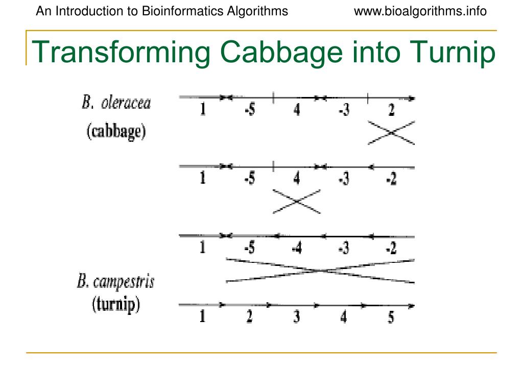 Transforming Cabbage into Turnip