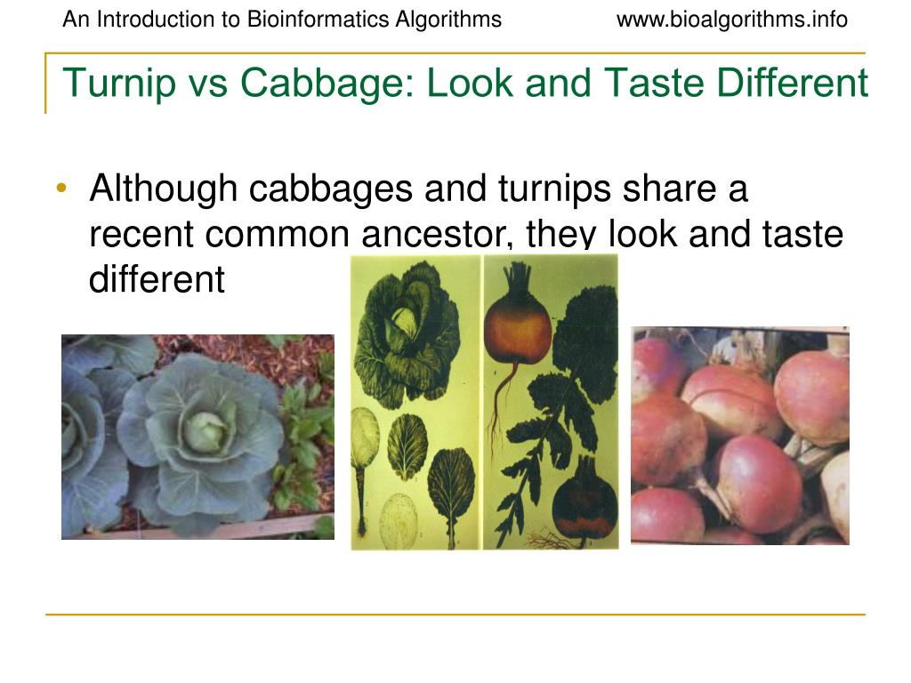 Turnip vs Cabbage: Look and Taste Different