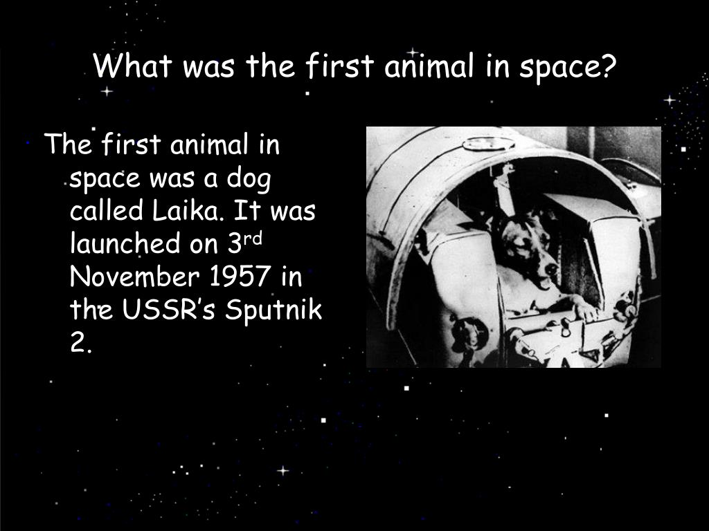 What was the first animal in space?