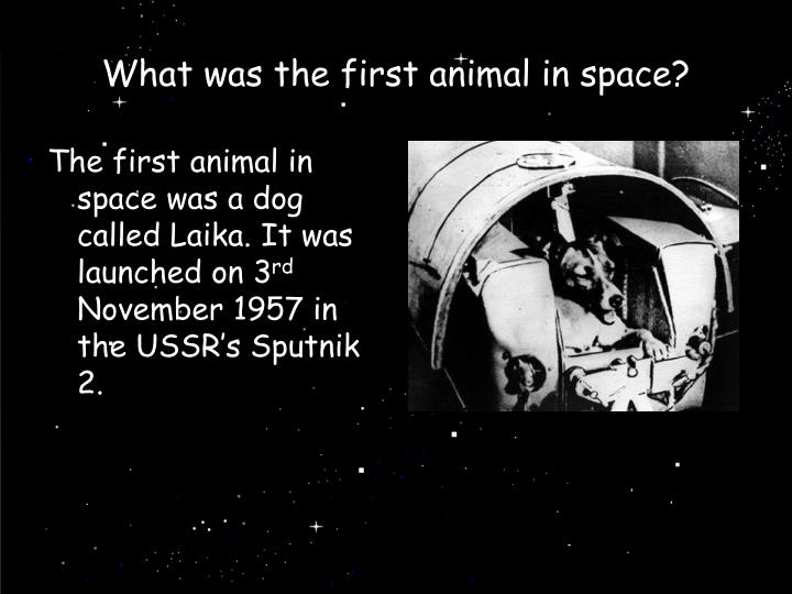 What was the first animal in space