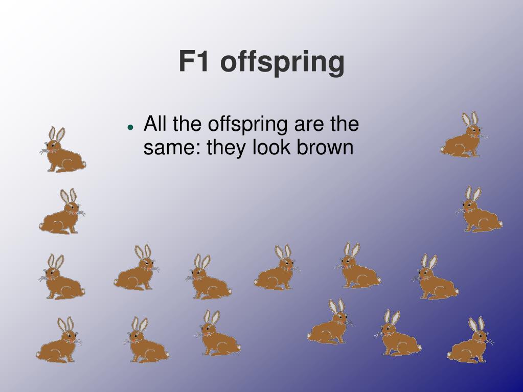 F1 offspring